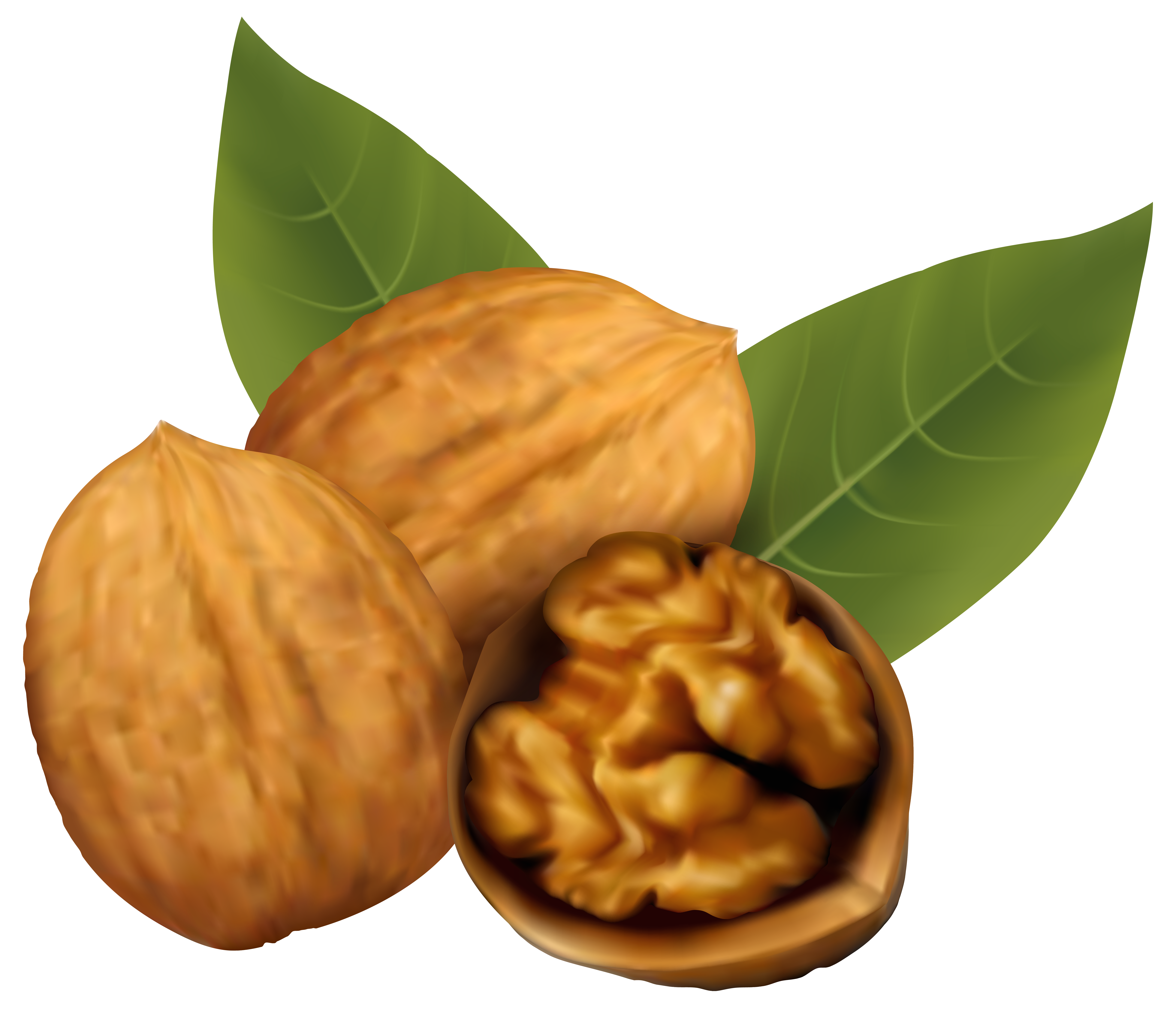 Walnuts png image gallery. Nuts clipart different seed