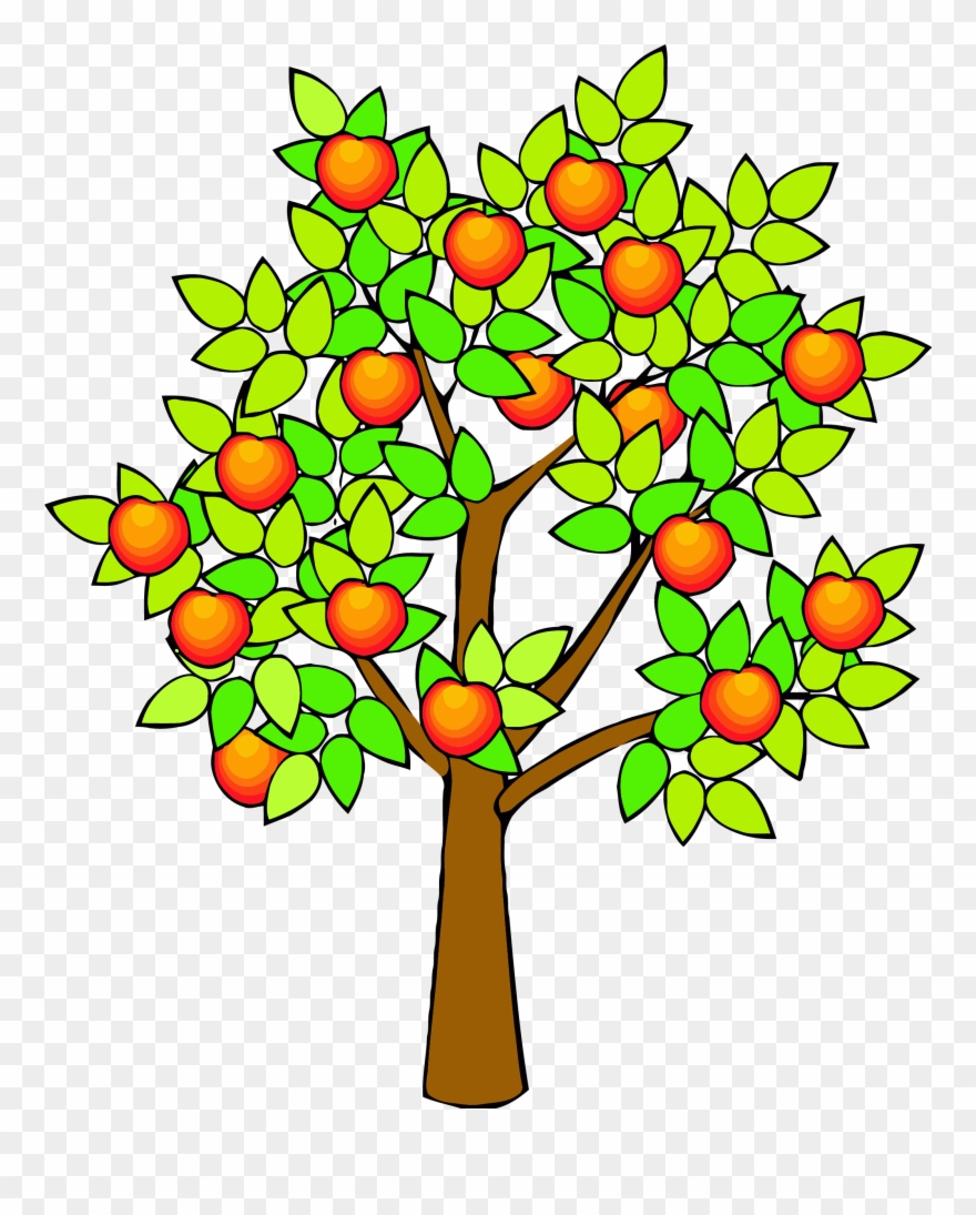 Spring green tree png. Clipart trees fruit