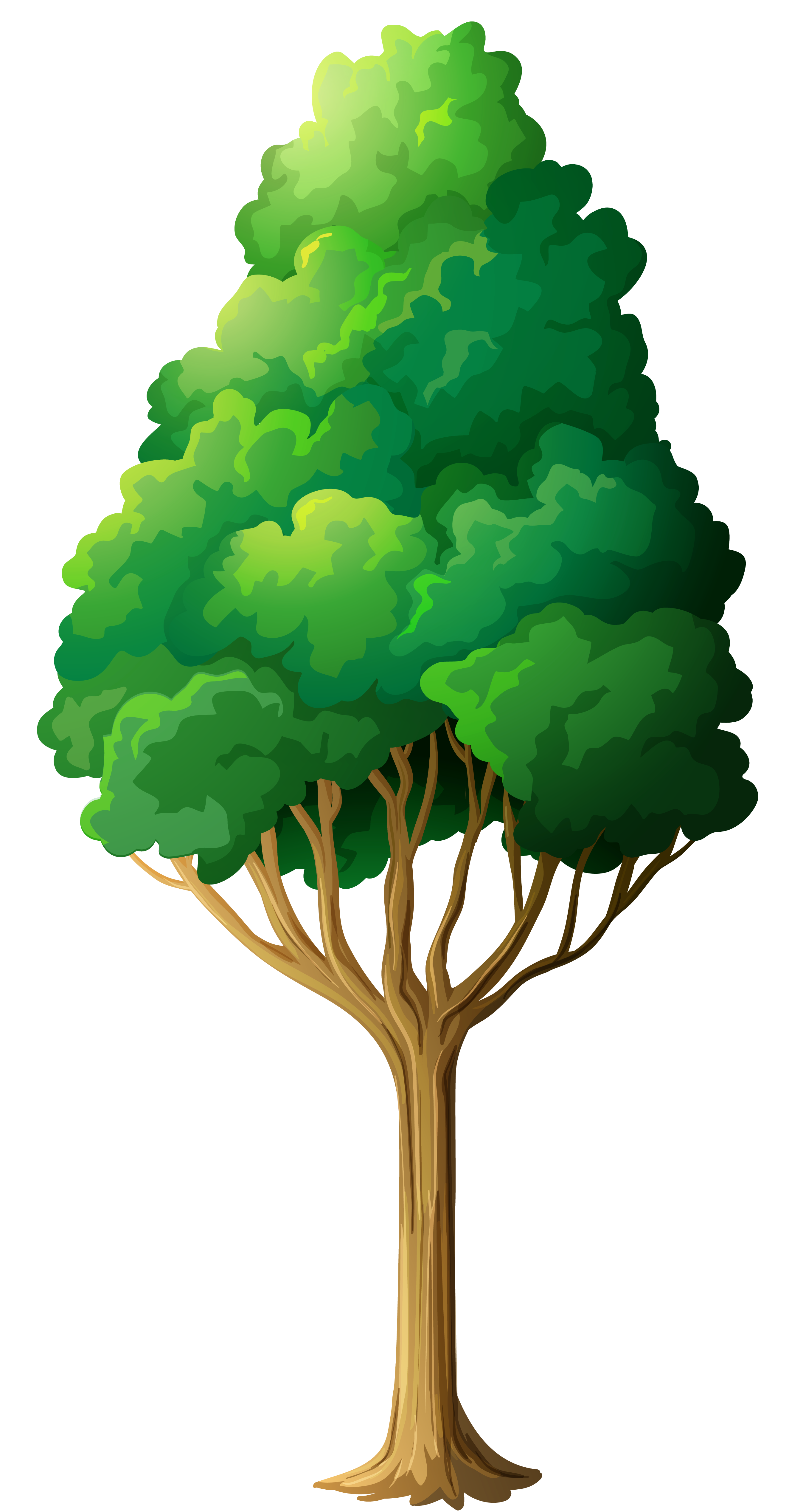 Tree clipart green. Png gallery yopriceville high