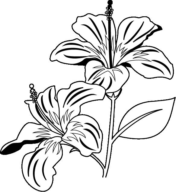 collection of plant. Plants clipart gumamela