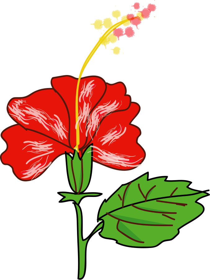 Free hibiscus flower art. Clipart tree gumamela