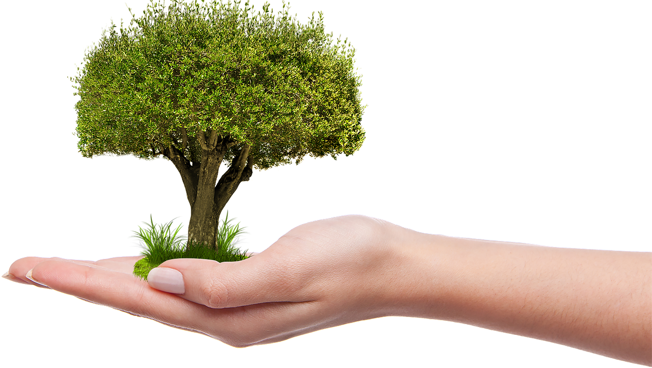 Nature grow hold plant. Clipart tree hand holding