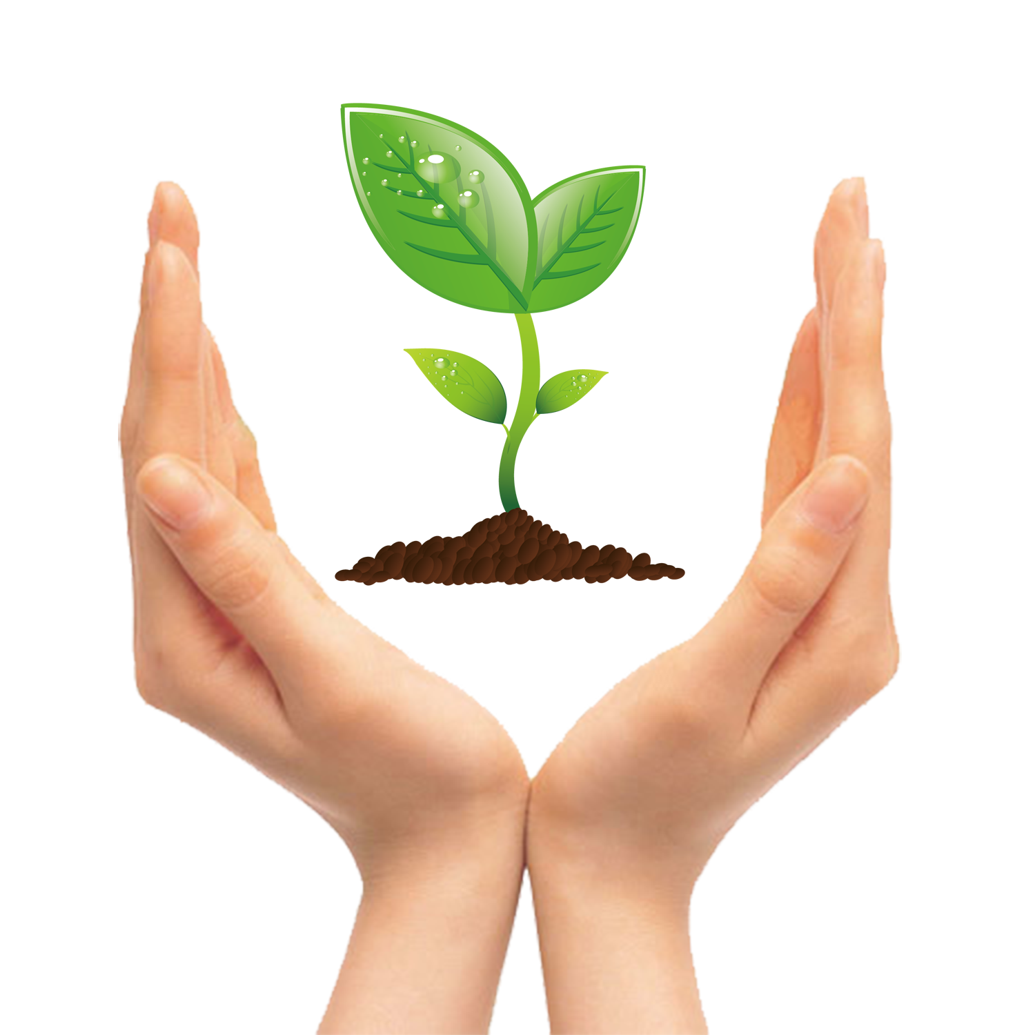 Seedling clip art green. Tree clipart hand holding