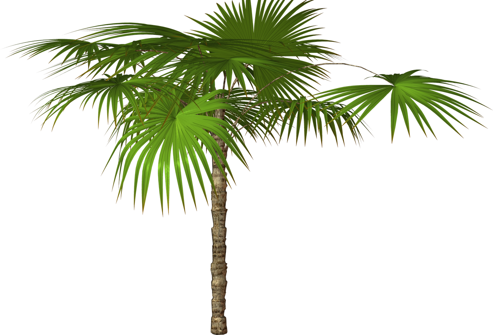 Palm tree transparent png. Clipart trees high resolution