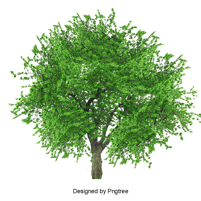 Clipart tree high resolution, Clipart tree high resolution ...
