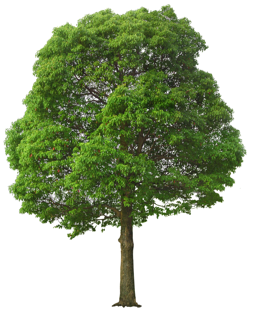 Clipart trees high resolution. Large green tree png