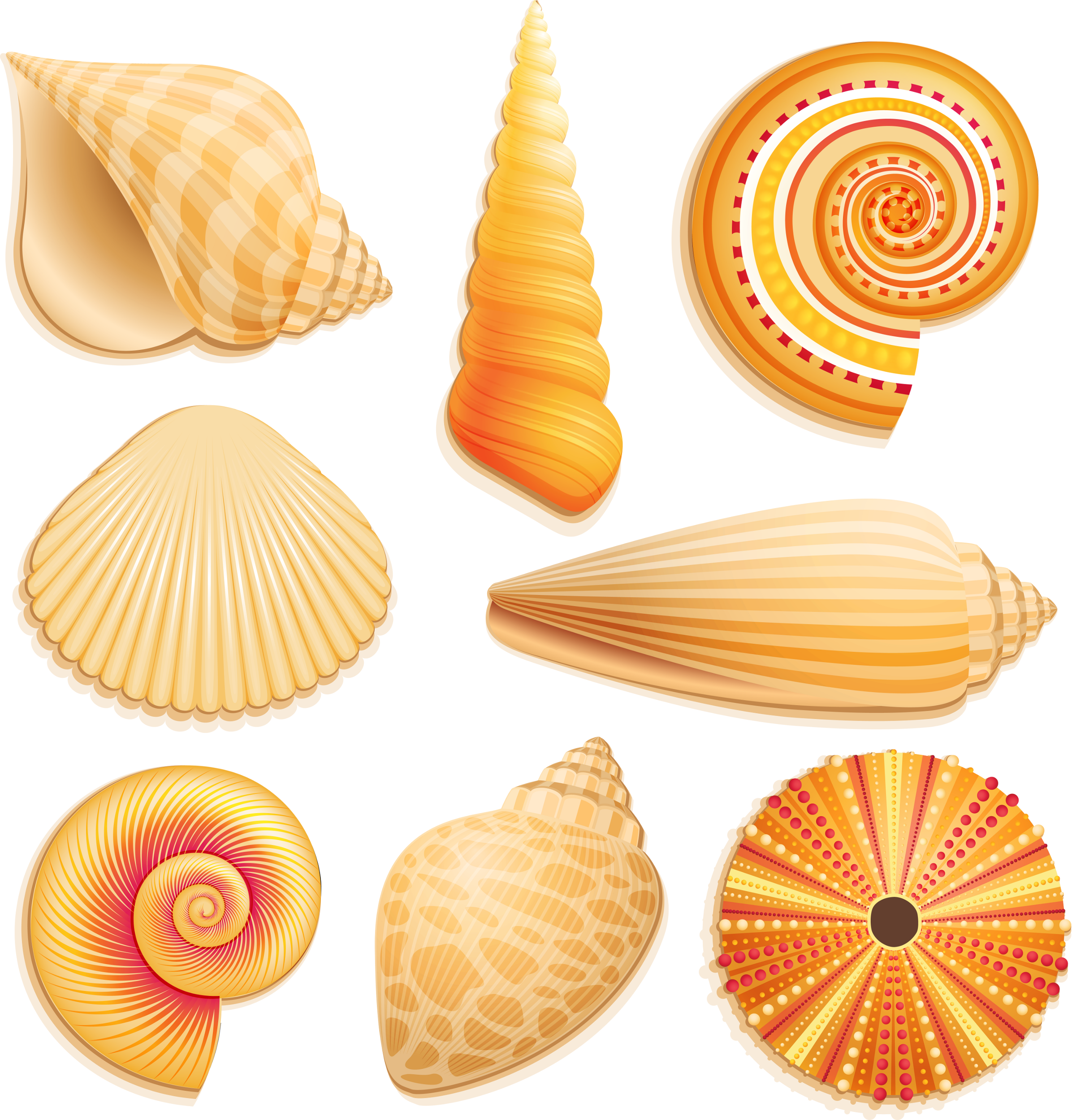 Shell clipart triton. Render nature renders coquillage