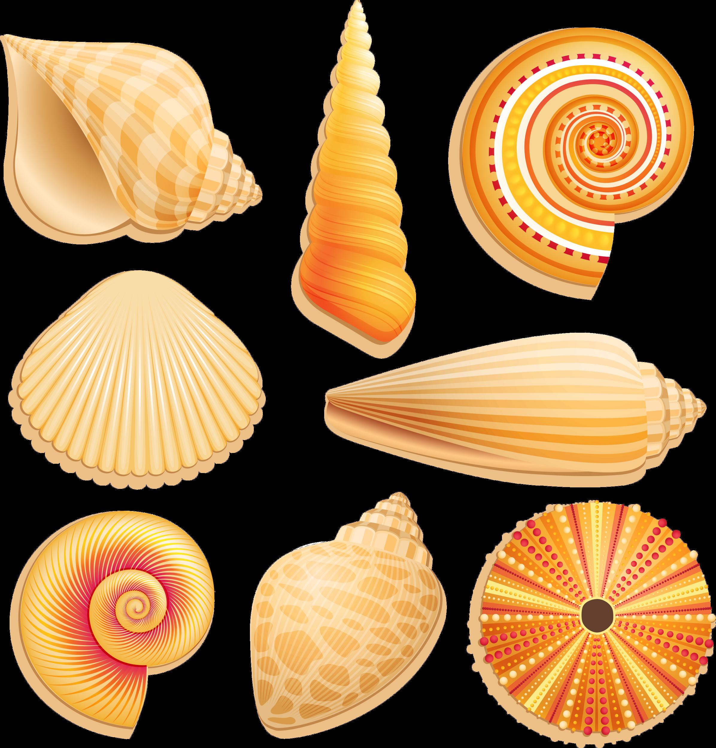 Orange clipart seashell. Render nature renders coquillage