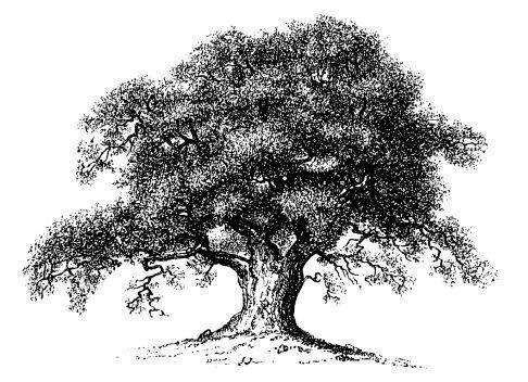 Tree clipart molave. Portal