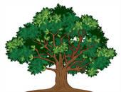 Portal . Tree clipart molave