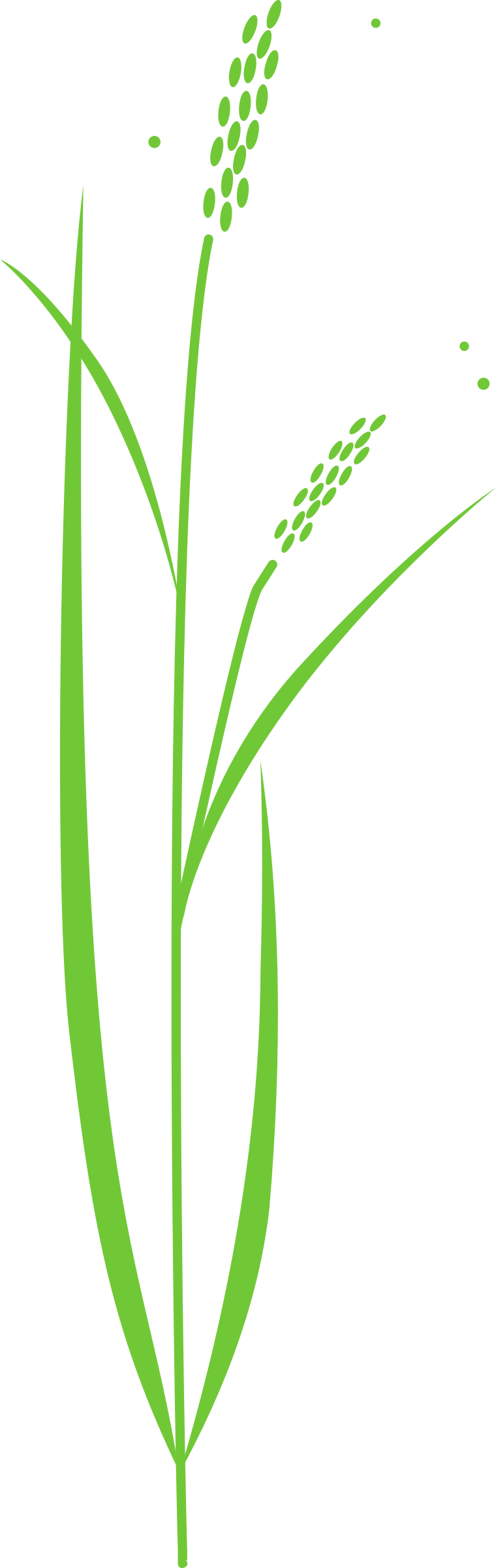 Tree clipart rice.  collection of plant