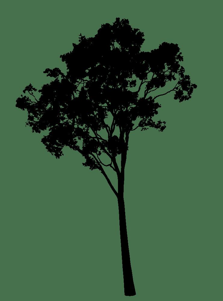 Gum silhouette eucalyptus rooweb. Clipart tree pdf