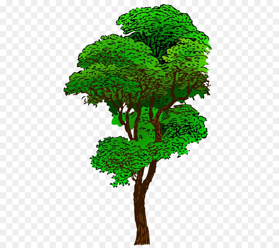 Jungle plants transparent clip. Tree clipart rainforest