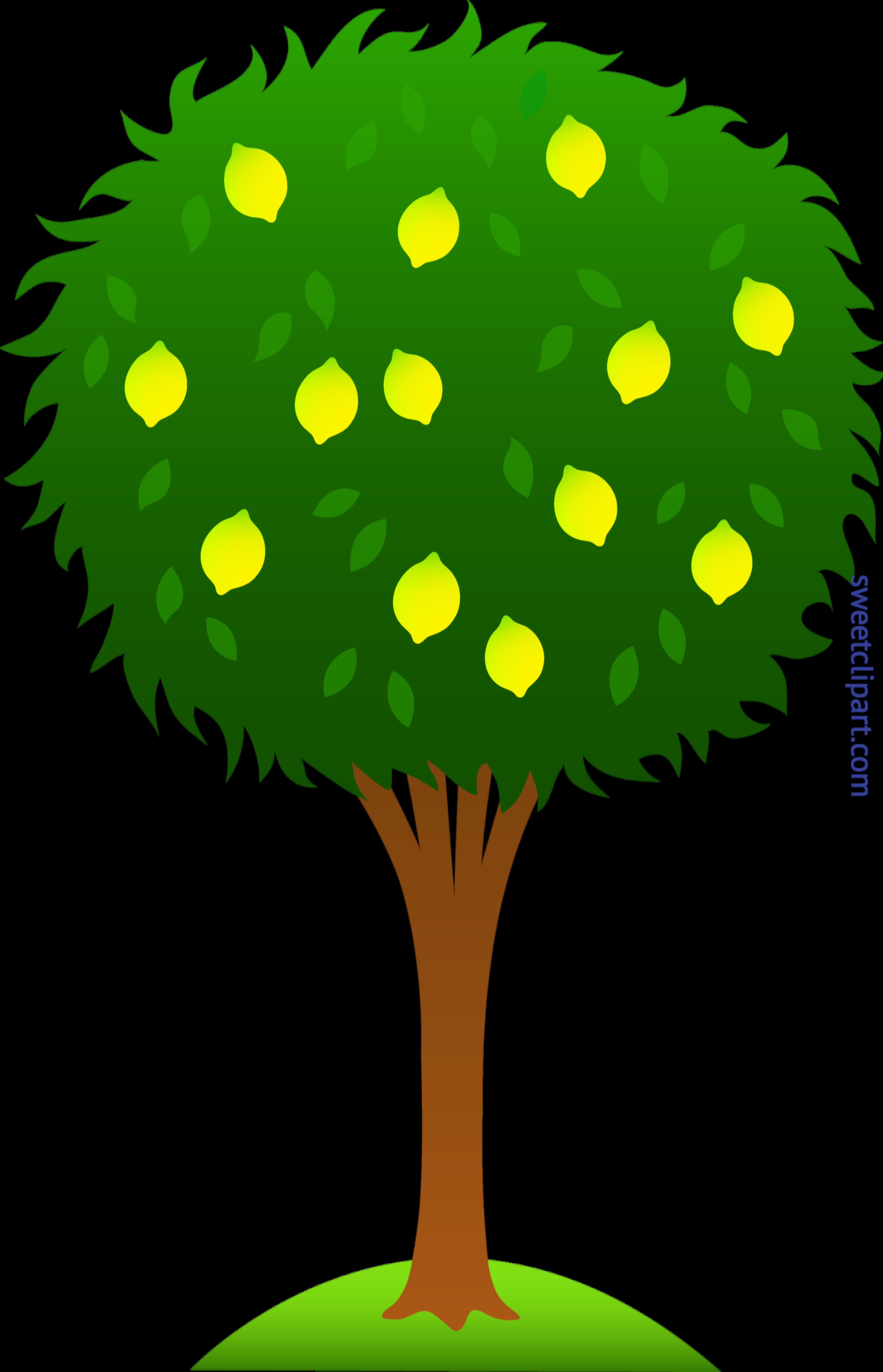 Lemon Tree Clip Art
