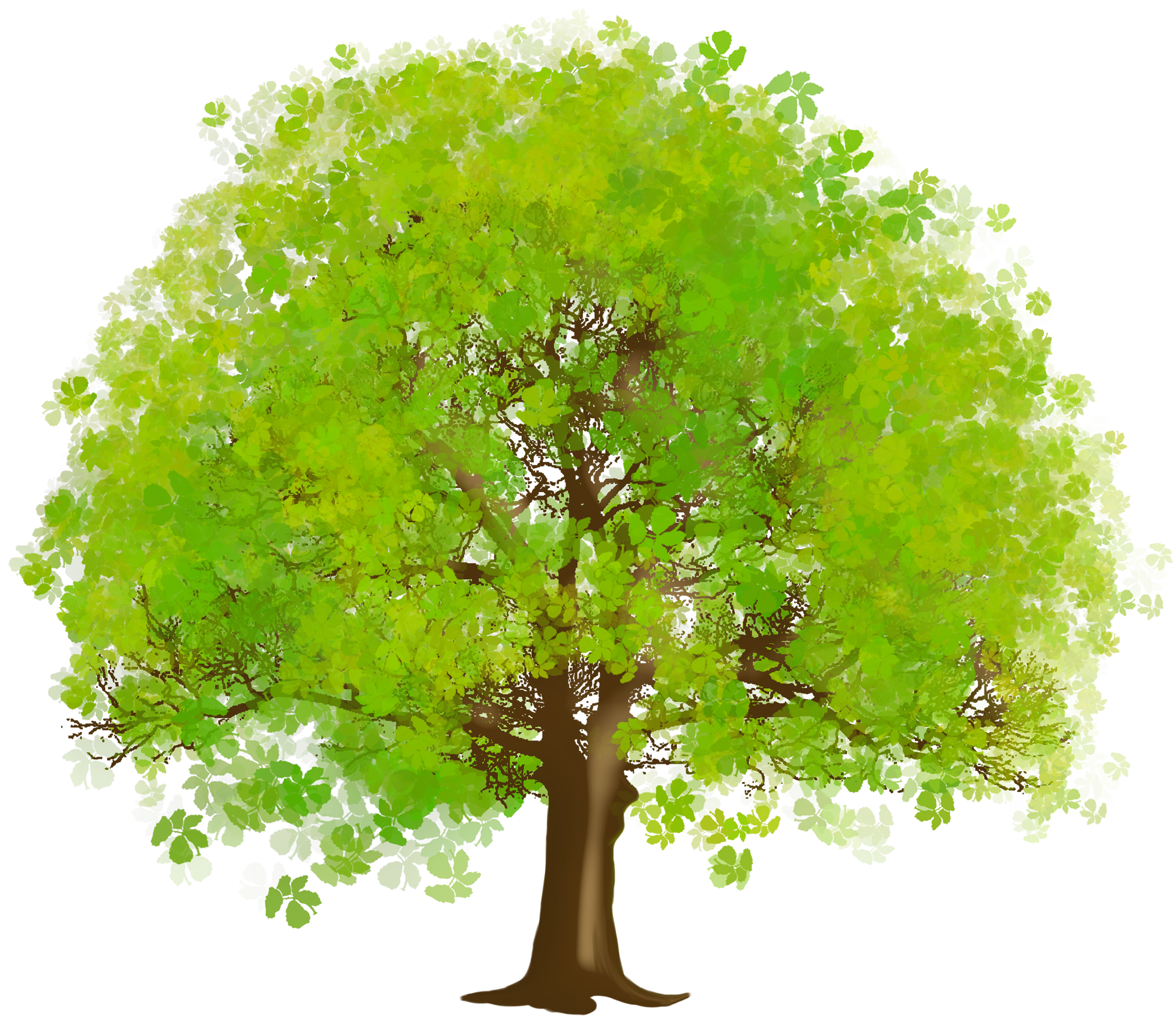Tree clipart narra. Hq png transparent images