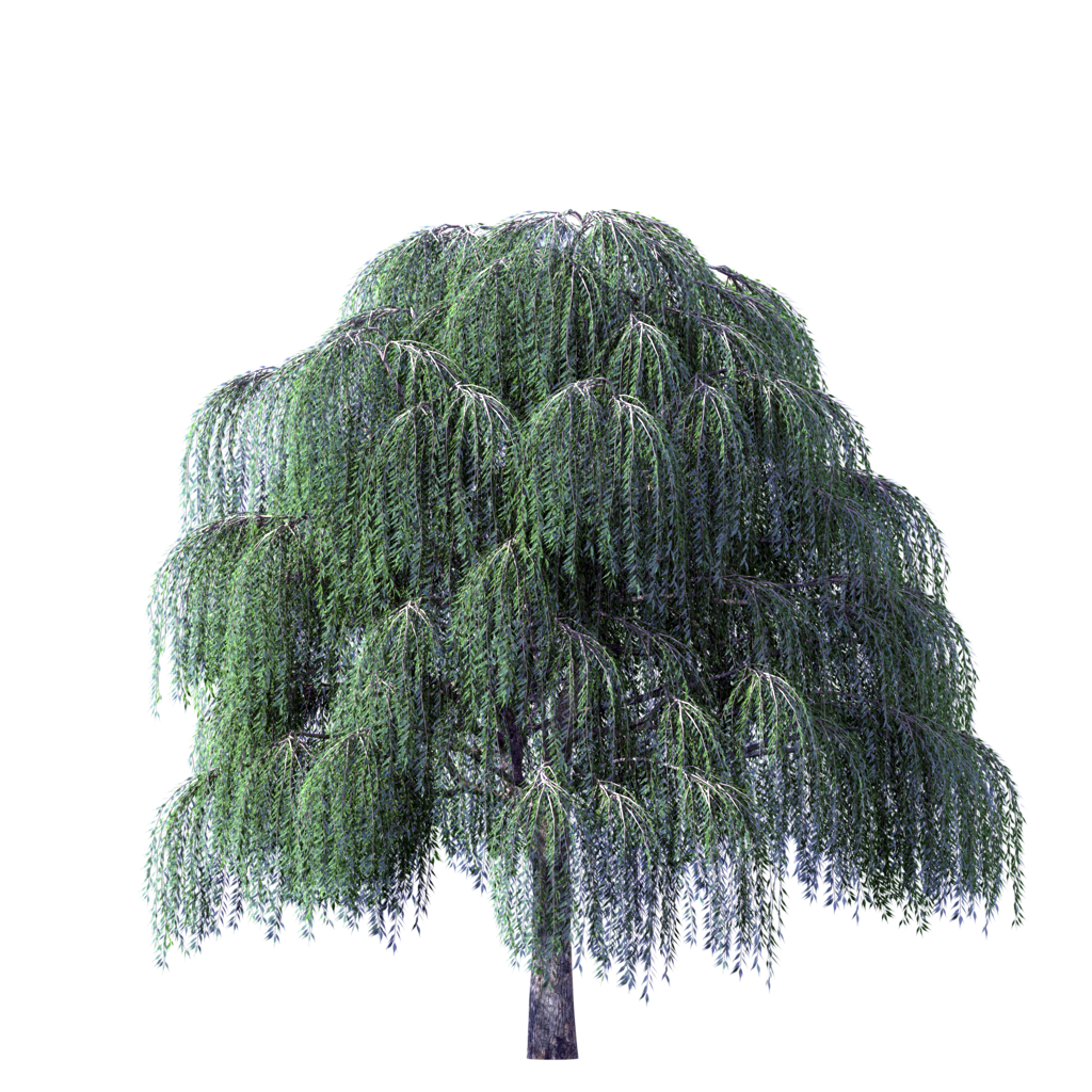 Image weeping willow river. Tree clipart september