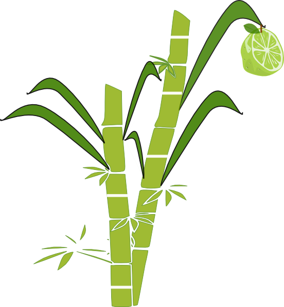 Tree clipart sugarcane.  collection of sugar