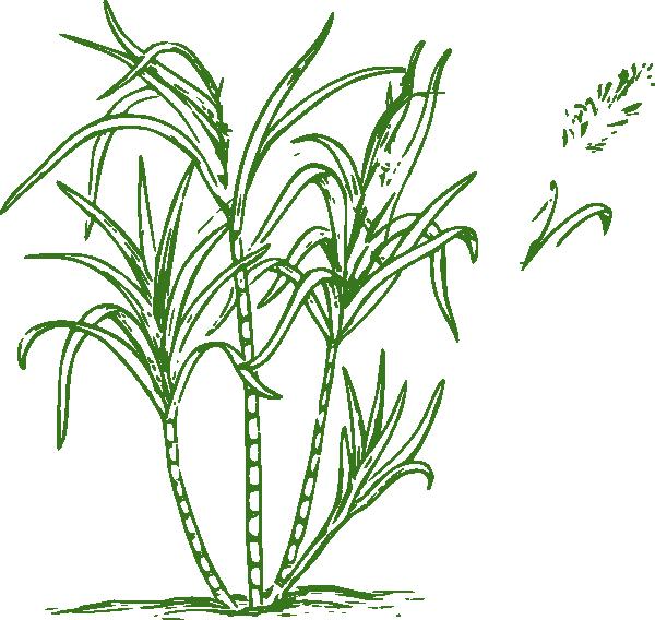 Sugar Cane Tree Clipart