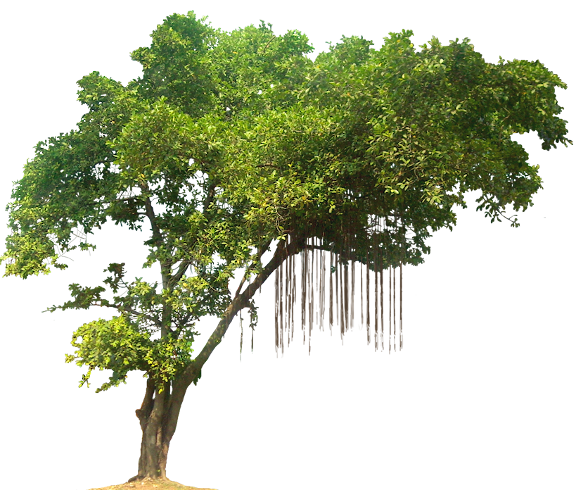 Trees png images. Tree transparent free download