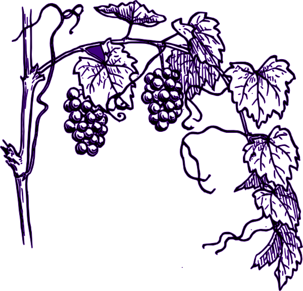 Purple grape clip art. Vines clipart vine plant