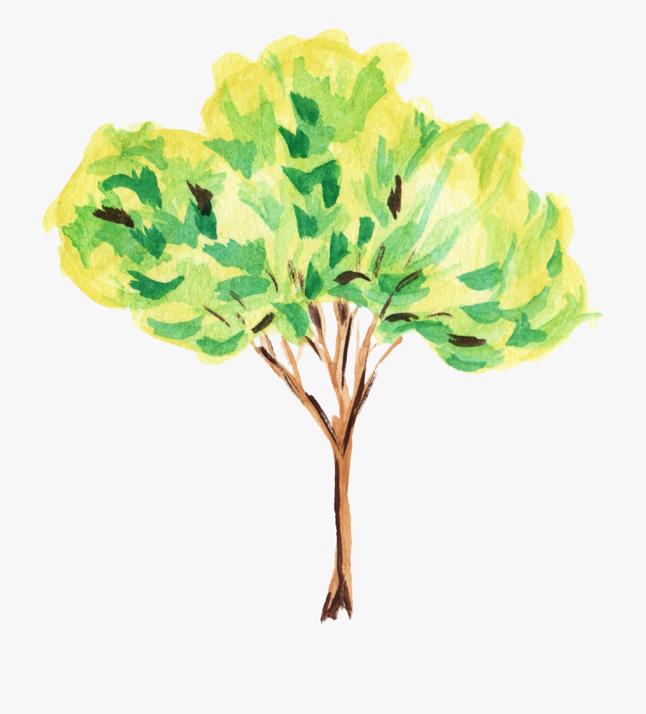 Water color transparent . Tree clipart watercolor