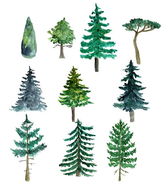 Tree clipart watercolor. Trees pine