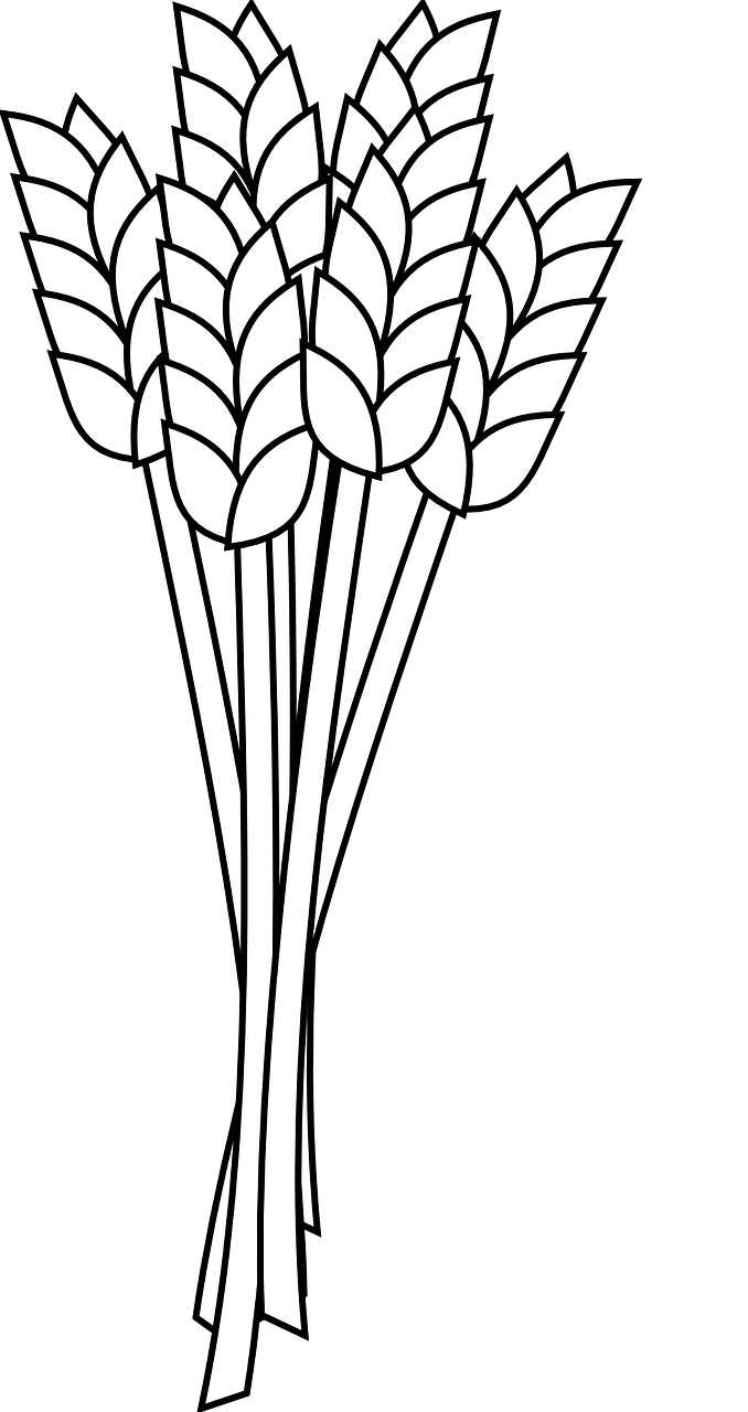 Wheat clipart line art. Plant drawing at getdrawings