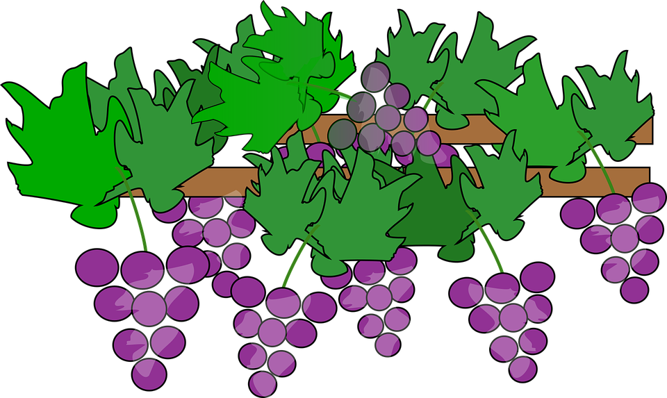 Clipart tree wheat. Grapes grape pencil and