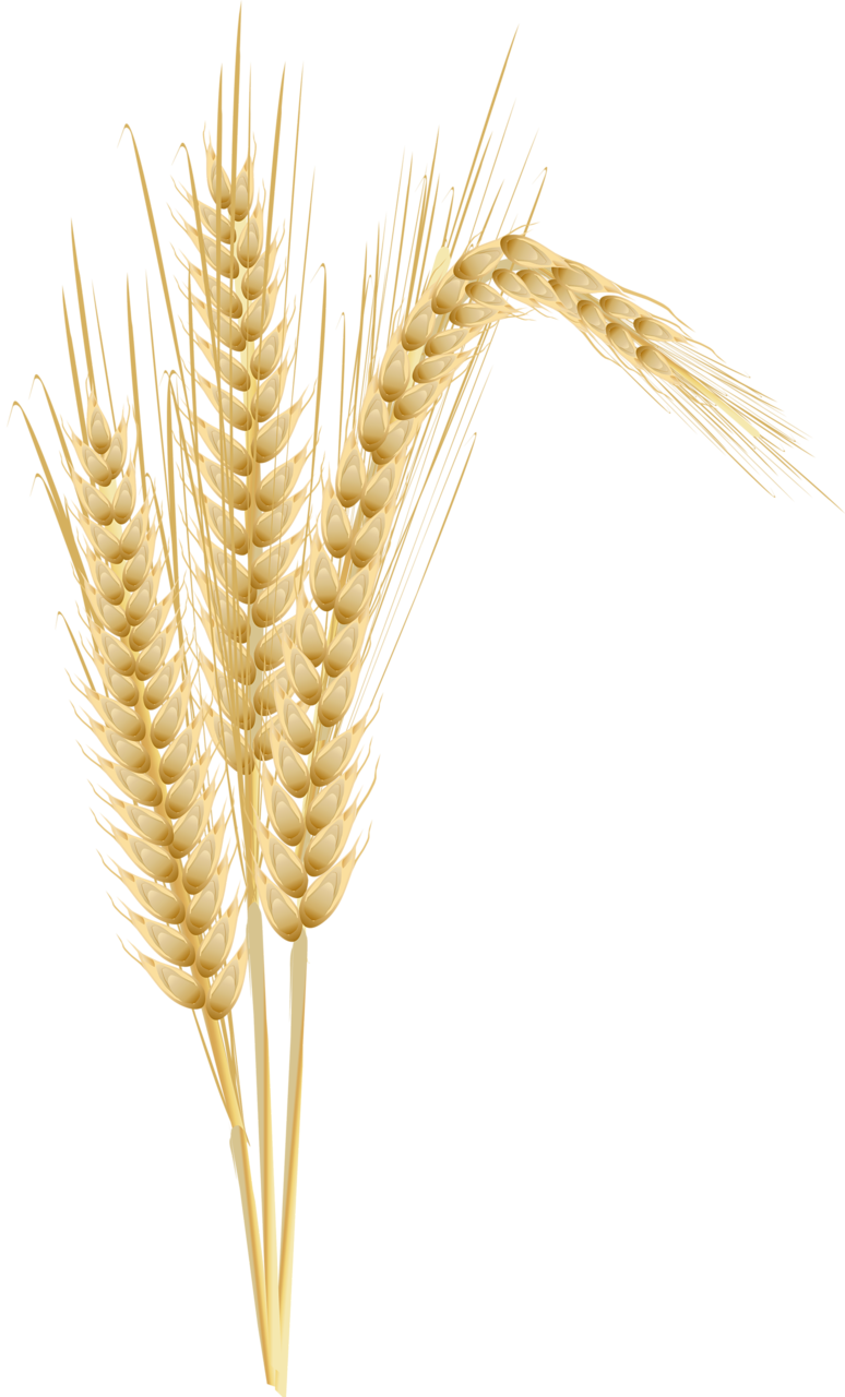 png pinterest clip. Wheat clipart tree