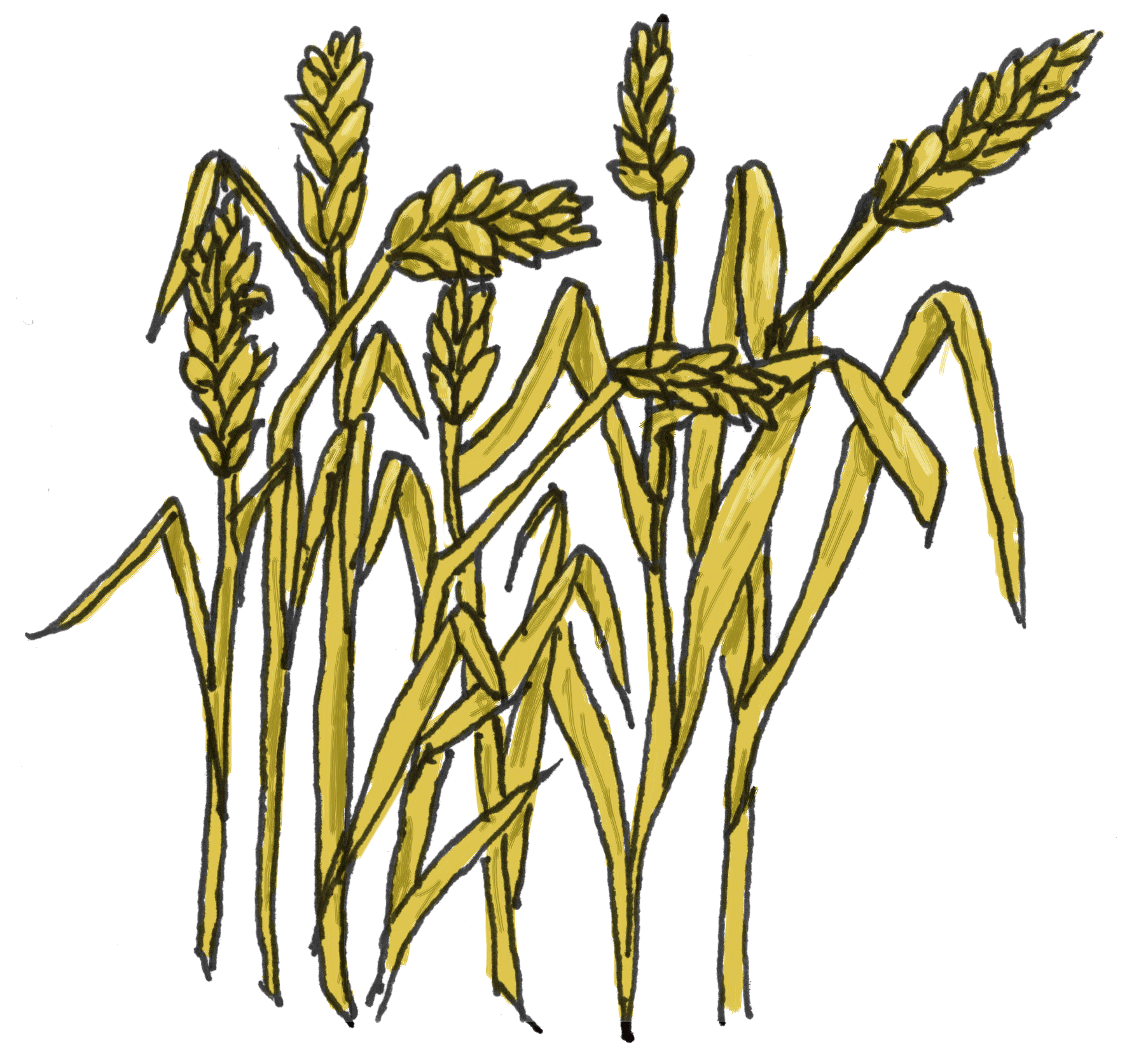 Free collection download and. Clipart tree wheat