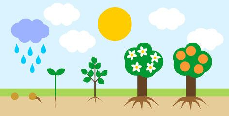 Seedling clipart growth rate. Landscape with life cycle