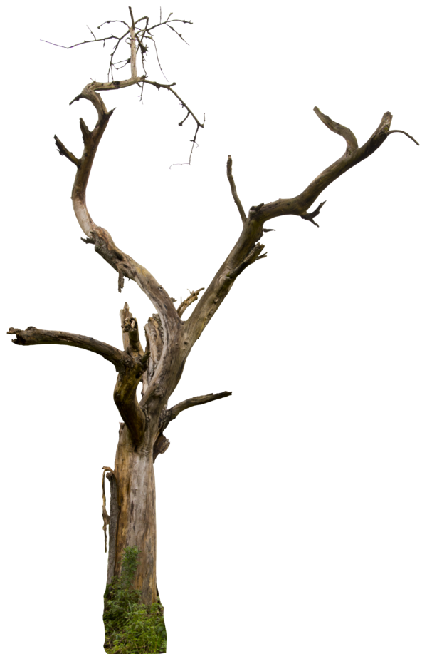 Clipart trees dead. Tree hq by gd