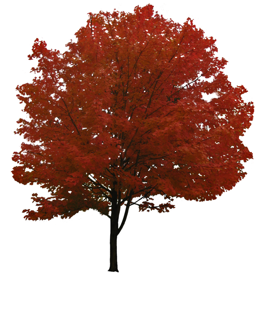 Tree png image picpng. Clipart trees face