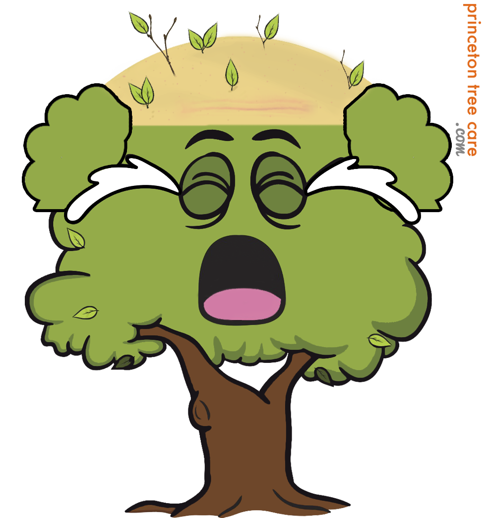 Lumberjack clipart tree removal. Of knowledge blog princeton
