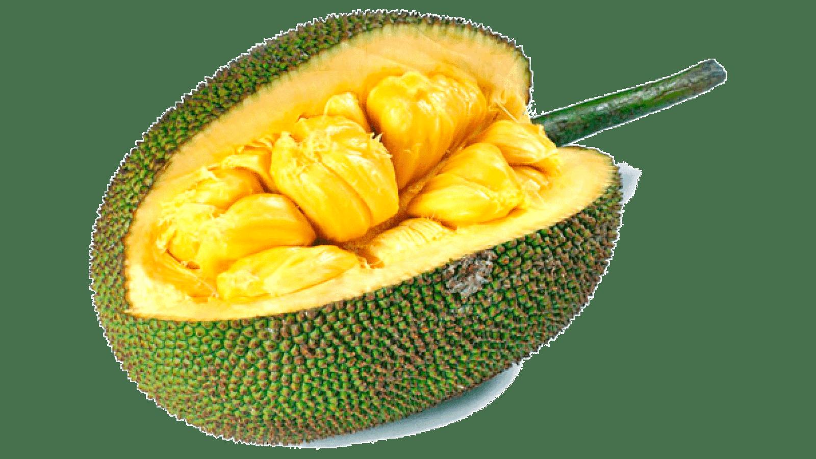 Jackfruit cempedak food nutrient. Tree clipart jack fruit