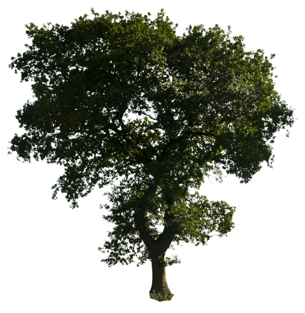 Clipart tree download free. Trees png images