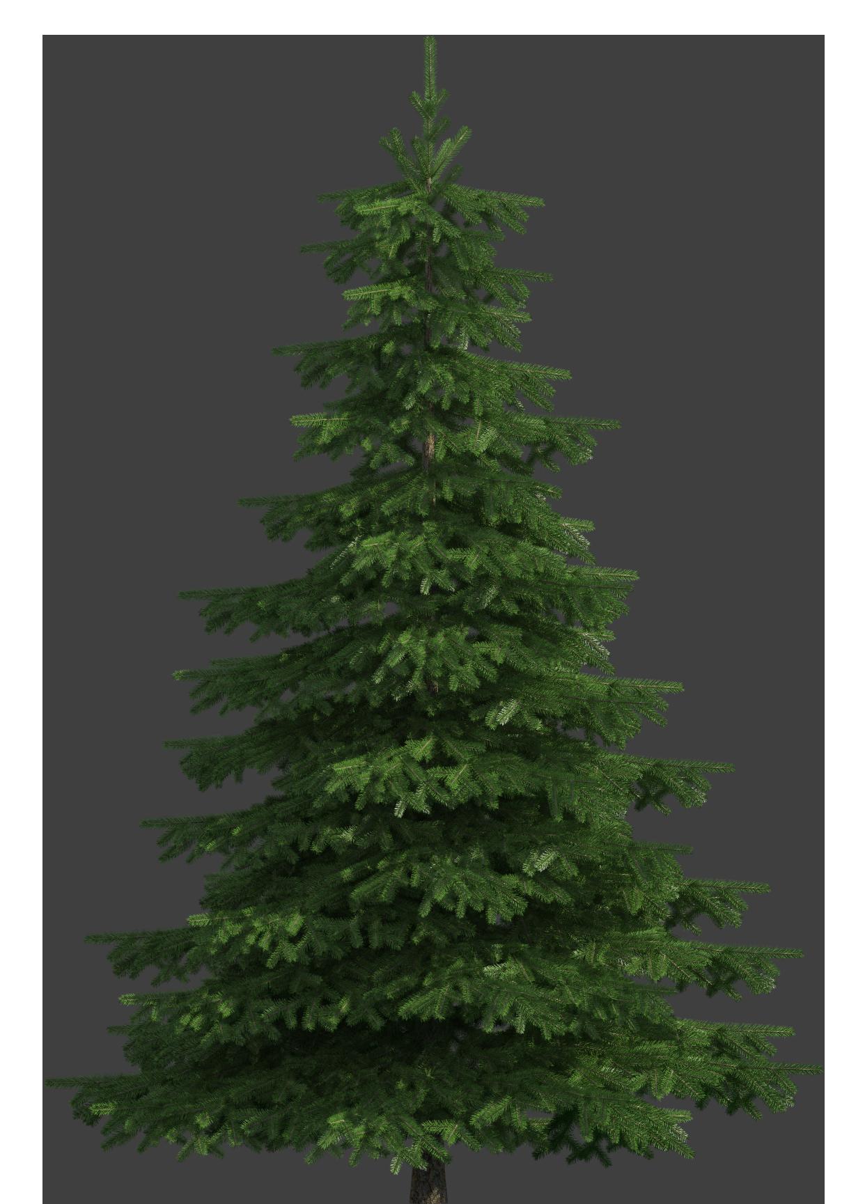 Realistic pine tree png. Pinecone clipart gymnosperm