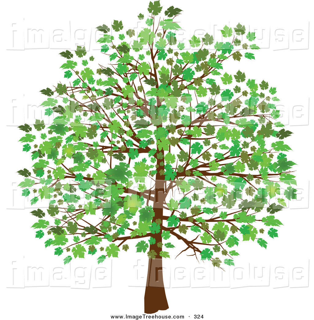 Free images of tree. Clipart trees school