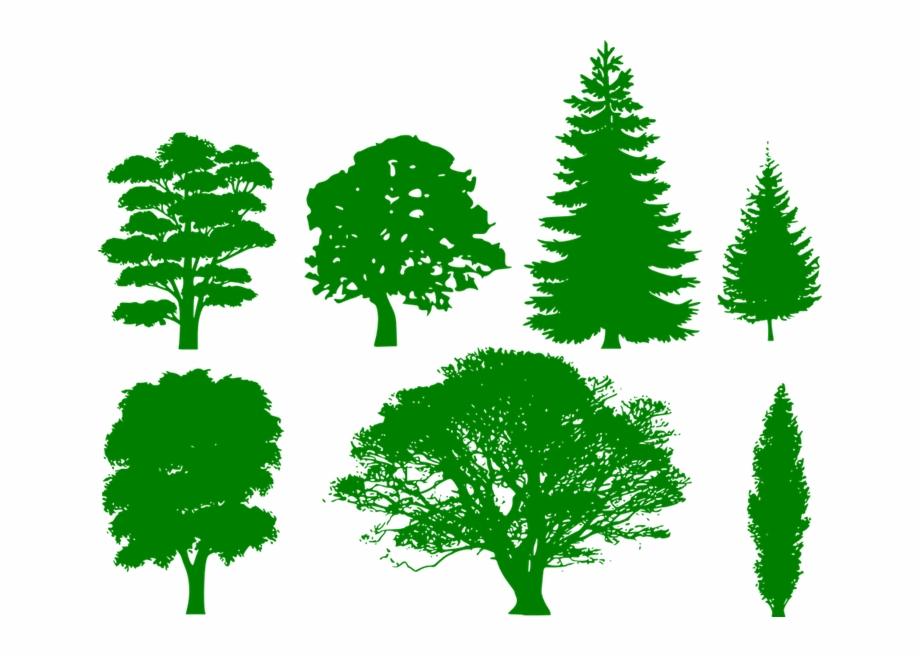 Columnar tree green transparent. Clipart trees shape