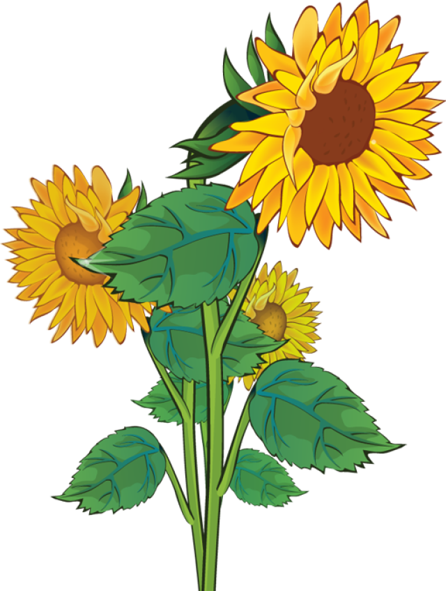 Free clip art sunflowers. Tree clipart sunflower