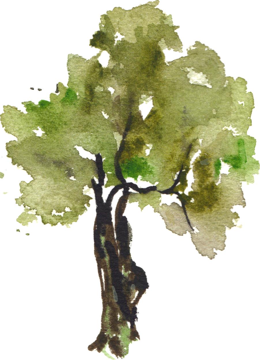 grapevine clipart watercolor