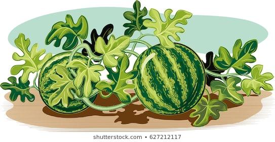 Watermelon clipart tree. Portal