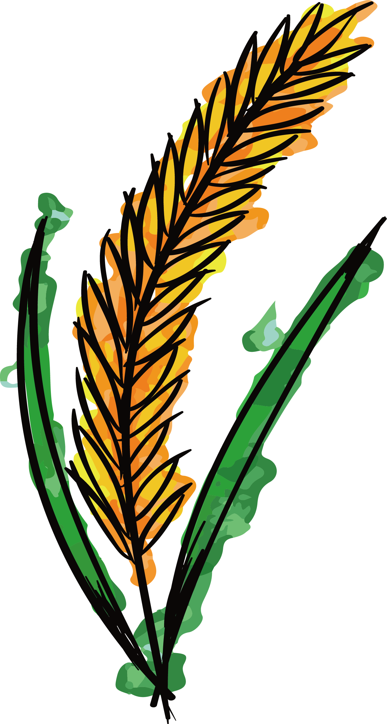 Watercolor painting clip art. Wheat clipart branch