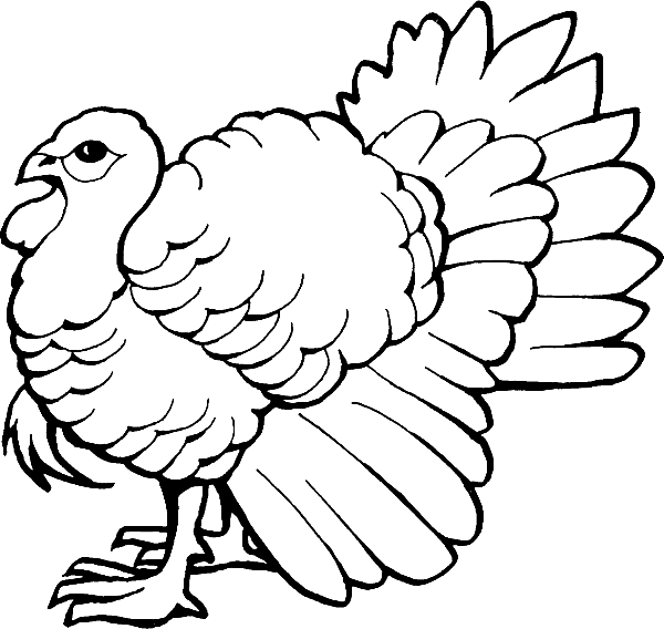 Turkeys clipart coloring page. Pages turkey free and