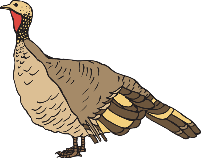 Turkeys clipart pretty. Free turkey trap cliparts