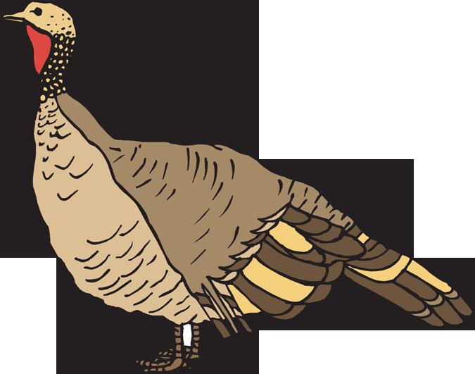 Clipart turkey monogram. Clip art wild arts