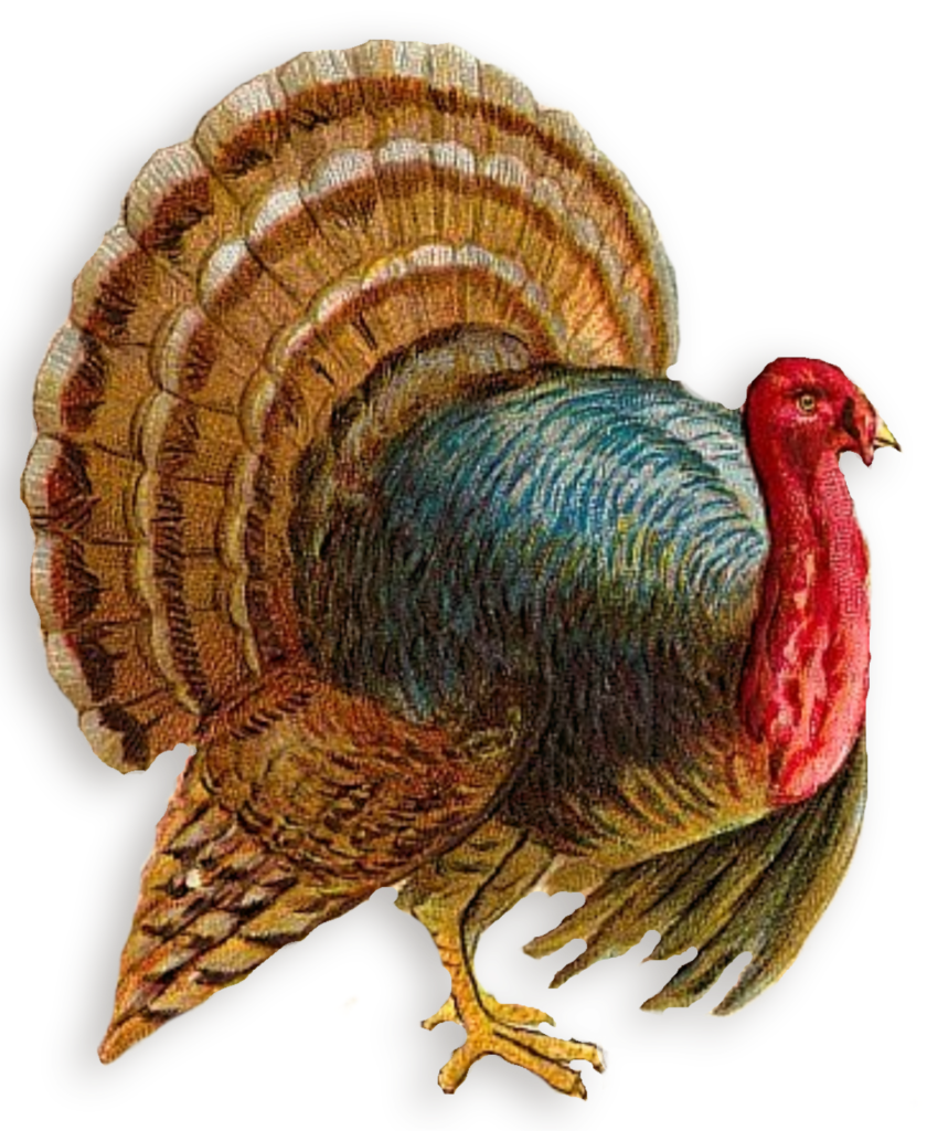 Nose clipart turkey. Png peoplepng com