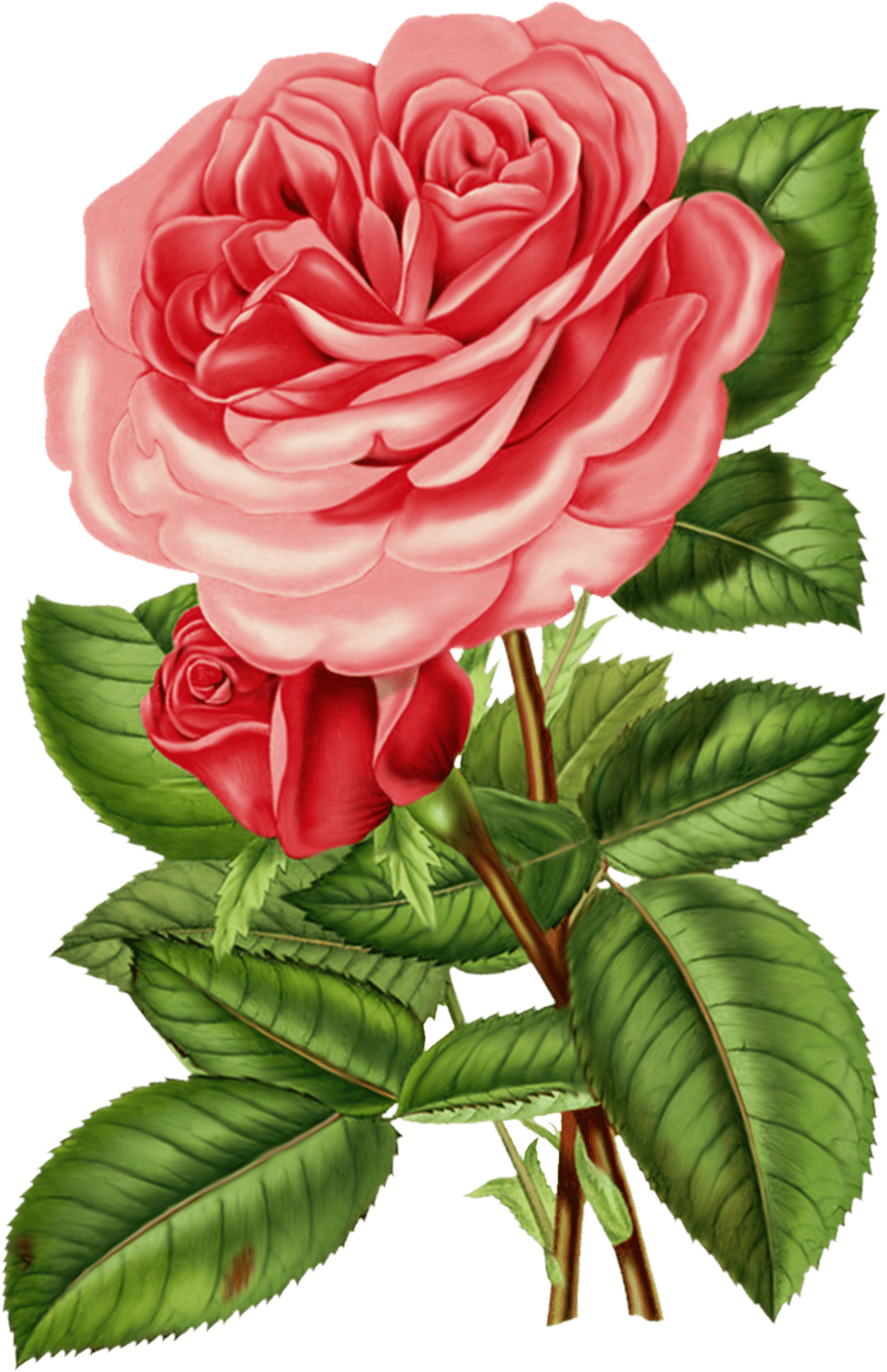 Victorian Pink Rose Clipart