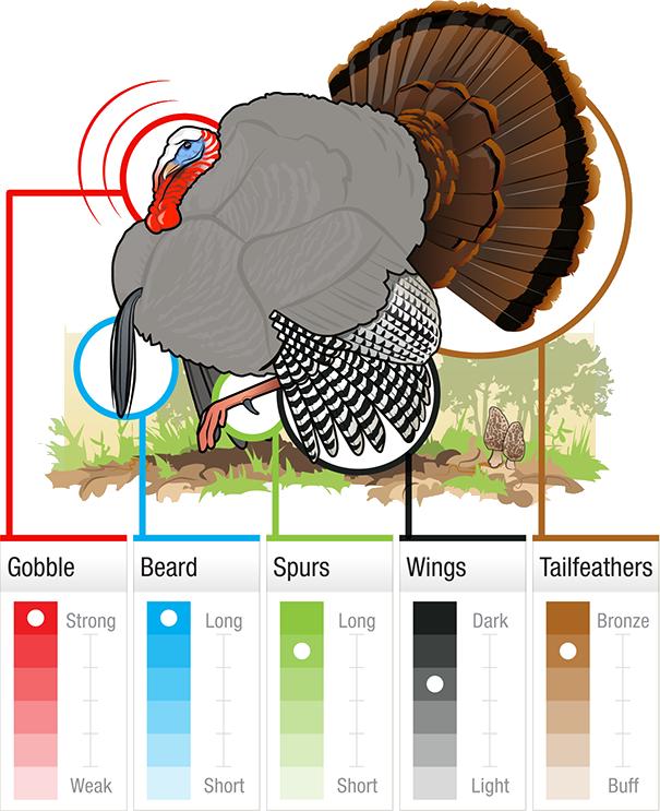 Grand slam gobbler id. Hunter clipart hunter turkey