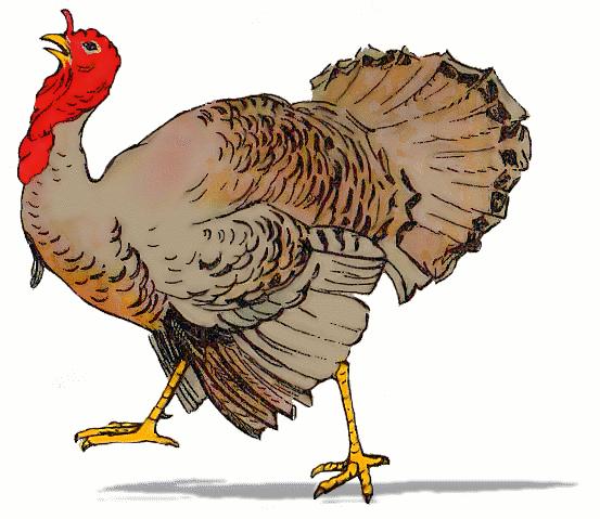 Free cliparts download clip. Clipart turkey wild turkey